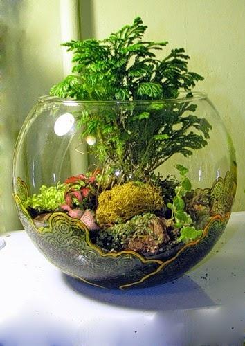 Домашние цветы в аквариуме