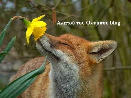 http://wwwaristofanis.blogspot.gr/