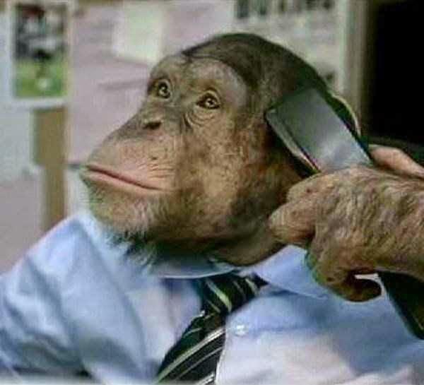 Macacos super dotados