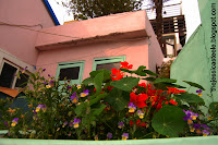 Pretty houses and flowers, Gamcheon Culture Village