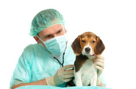gifs de los perros: