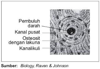 Sistem Havers pada jaringan tulang