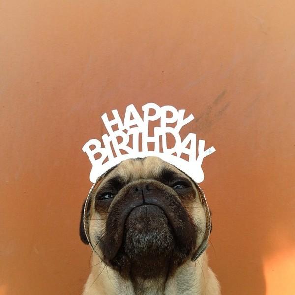 Hình ảnh chúc mừng sinh nhật dễ thương hài hước