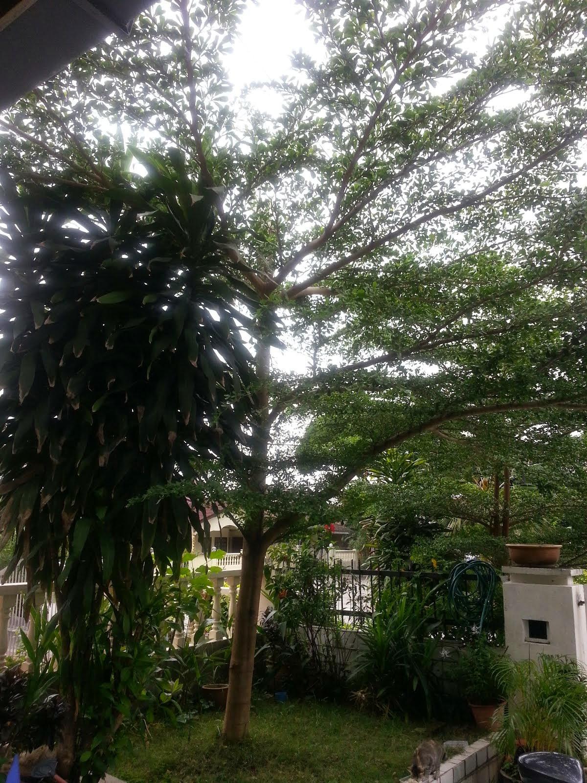 Dae's Tree