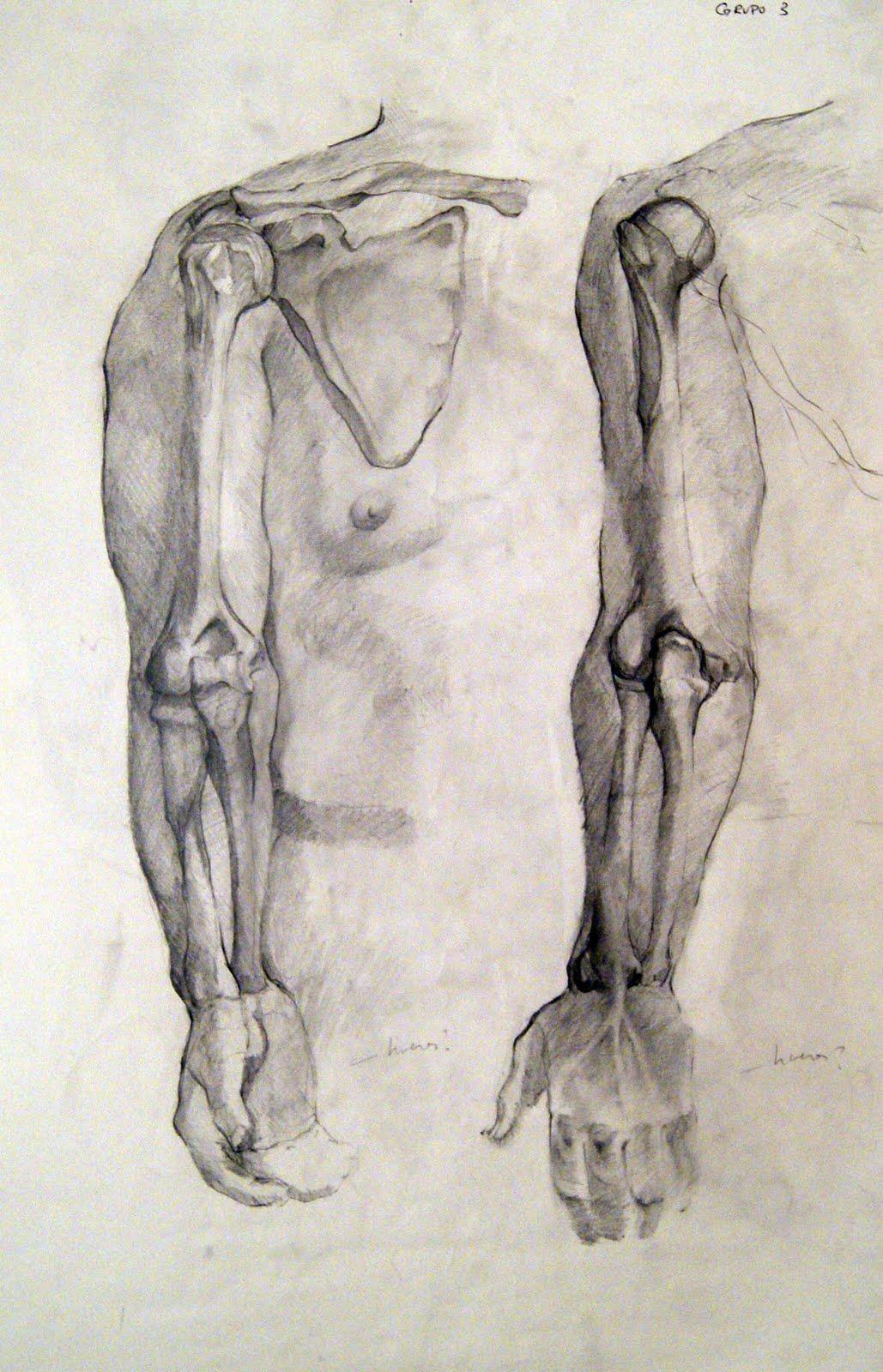 A Manos Llenas!: Anatomía del Brazo