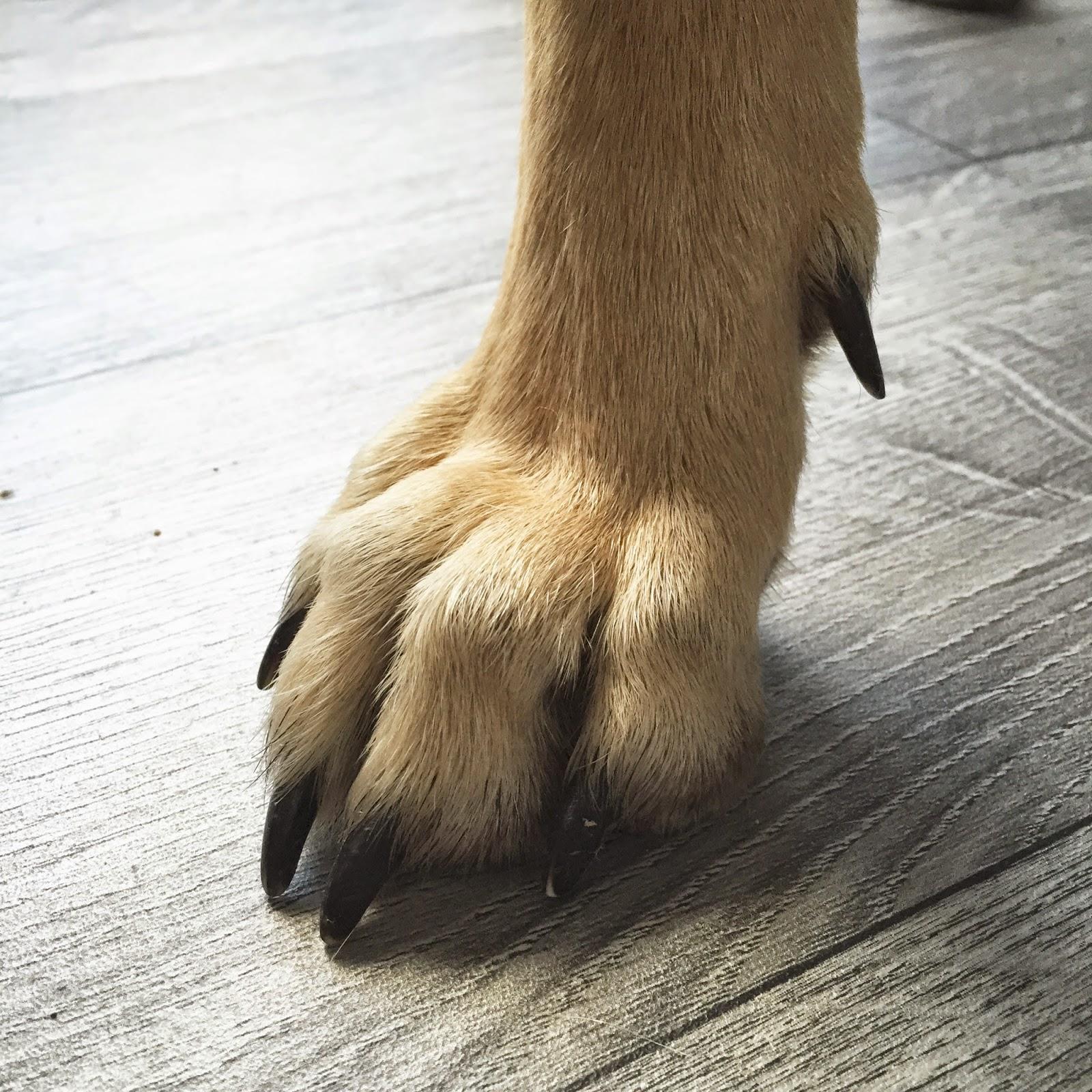 Ergot chien - Image patte de chien gratuite ...
