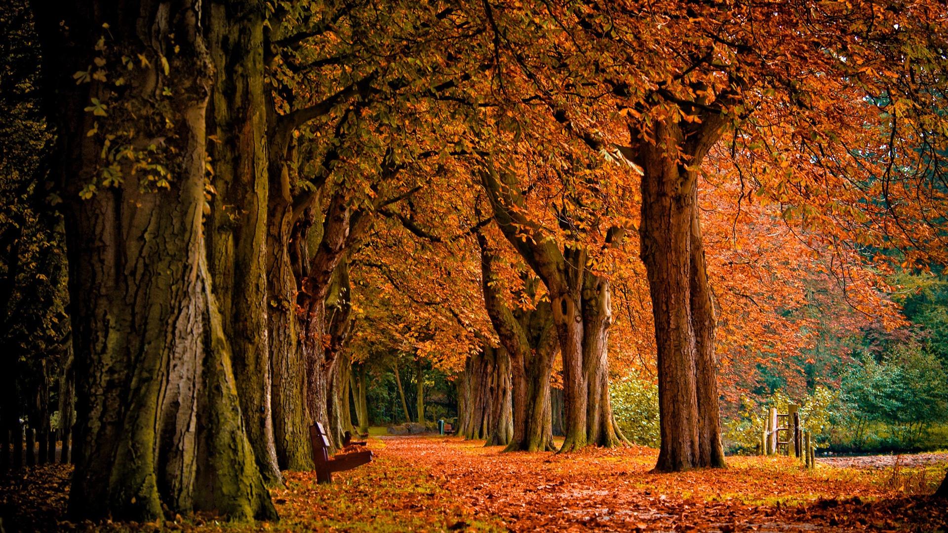 autumn park wallpaper 1920x1080 - photo #18