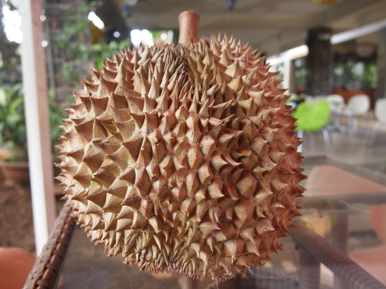 vietnam durian varieties. Black Bedroom Furniture Sets. Home Design Ideas