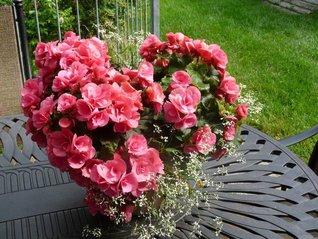 Simple Flower Garden kanelstrand: simple gardening: part 2