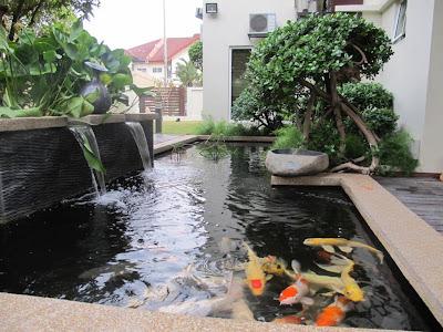 kolam ikan taman filter kolam ikan koi desain kolam ikan koi kolam ikan koi minimalis