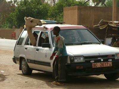 فقط في أفريقيا-منتهى