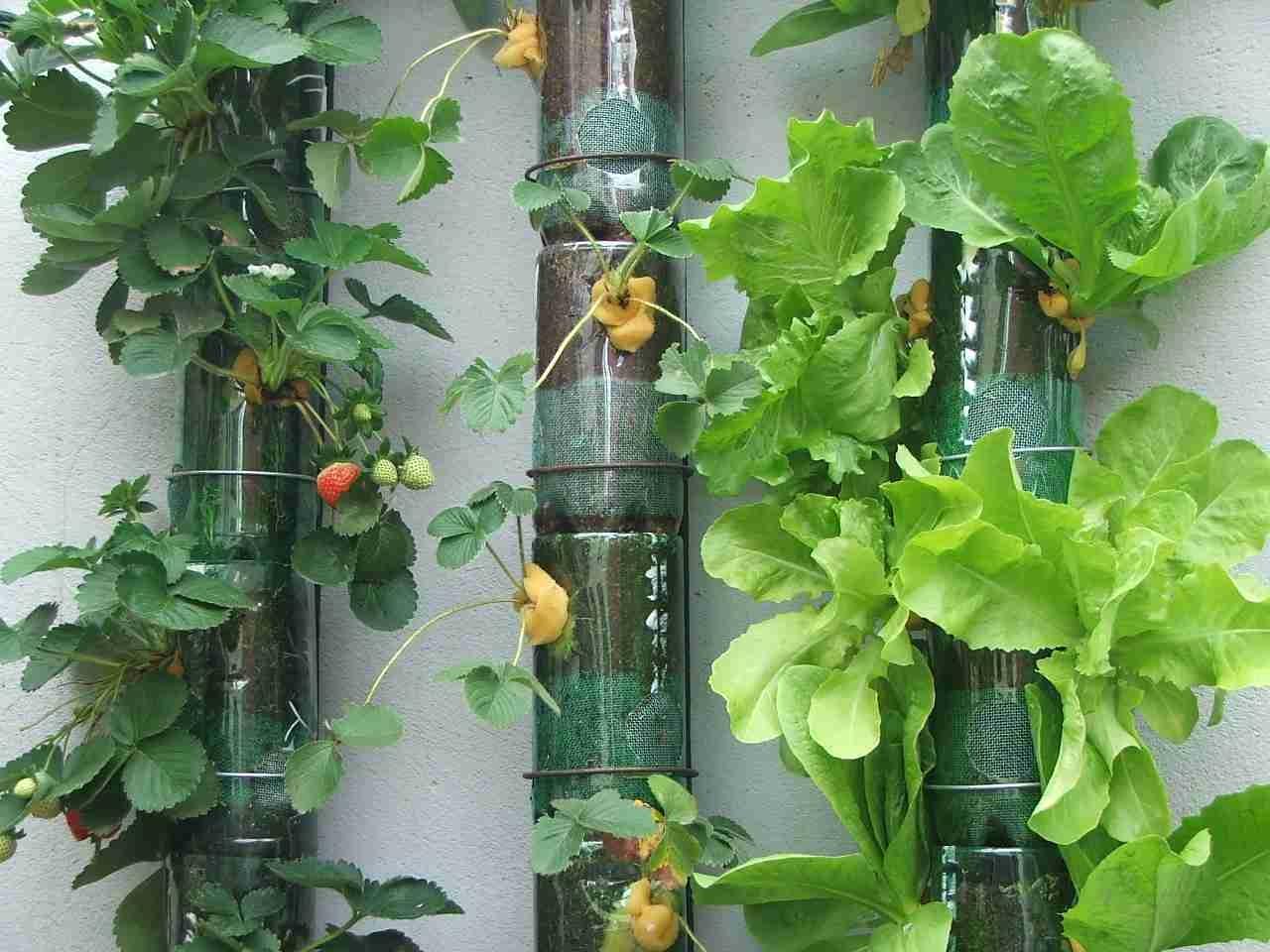 fazer jardim vertical garrafa pet:Fearless: Jardim vertical de garrafas pet