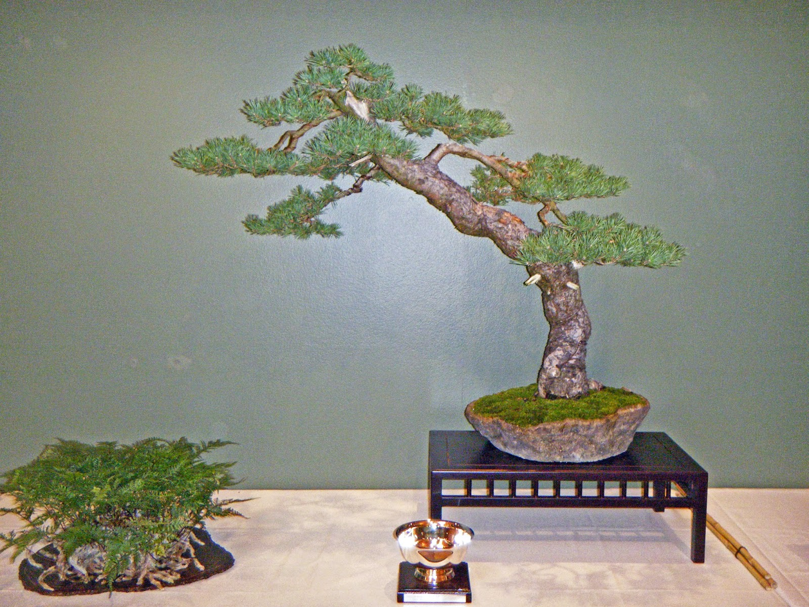 Bonsai In Hoosierland September 2014