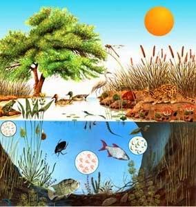 http://cplosangeles.juntaextremadura.net/web/edilim/curso_4/cmedio/el_ecosistema/la_conservacion/la_conservacion.html