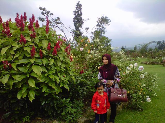 Pemandangan Bunga Ros Pictures