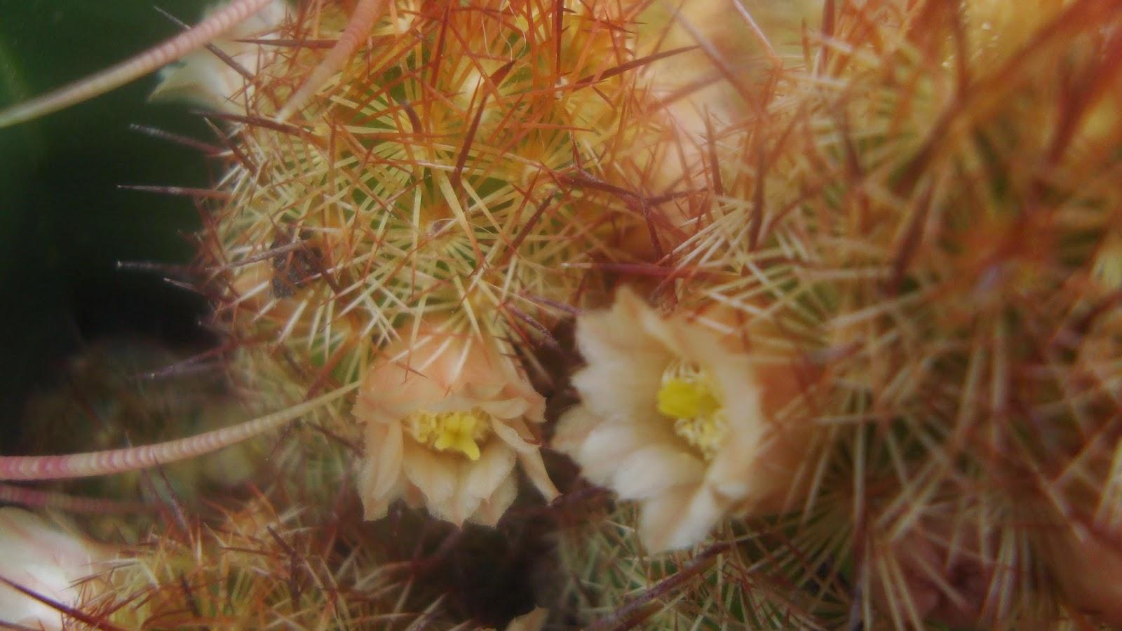 Floresamatxo todo sobre las flores consejos para cuidar - Informacion sobre los cactus ...