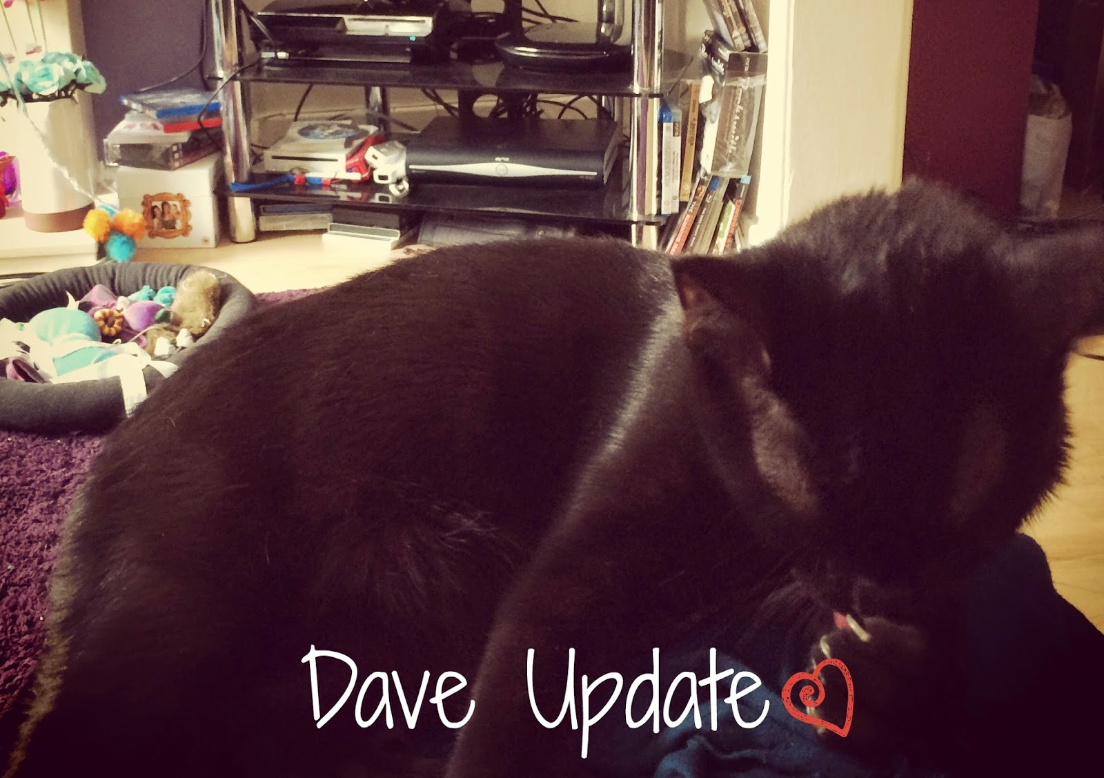 Dave the Cat