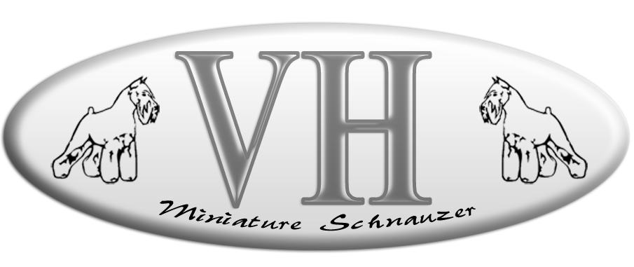 CANIL VH MINIATURE SCHNAUZER VILLA DER HUNDE