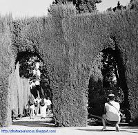 Jardines del Generalife - Generalife gardens