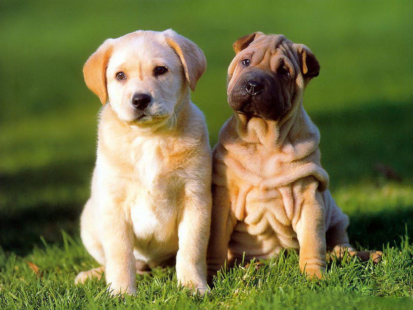 http://1.bp.blogspot.com/-BDnil8eHQCc/Tyw7_pK65ZI/AAAAAAAAA1s/OBeppSQX2-Y/s1600/9-Cute+Dog+1600x1200.jpg