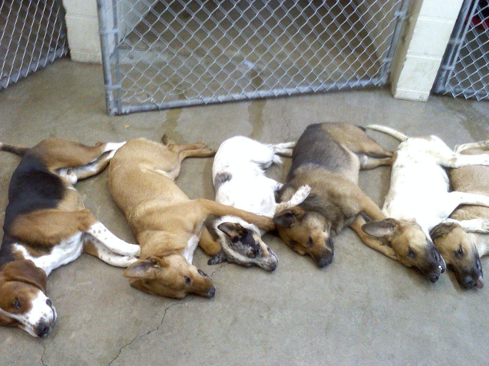 Salem Dog Rescue