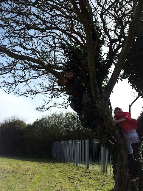 Pill Park Climb Tree