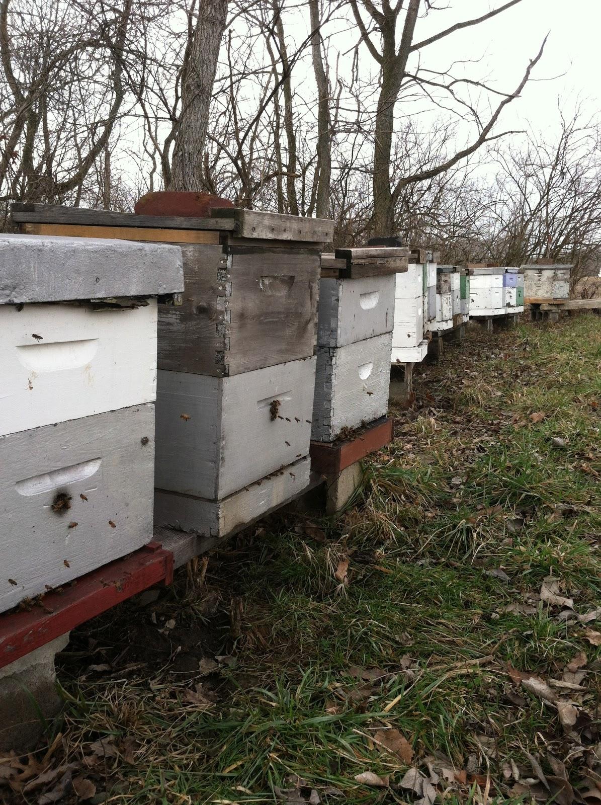 Honeyrun Farm: What Do Bees Do All Winter?