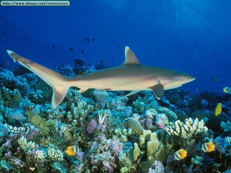Plongée sur la Grande barrière de corail via Google Street