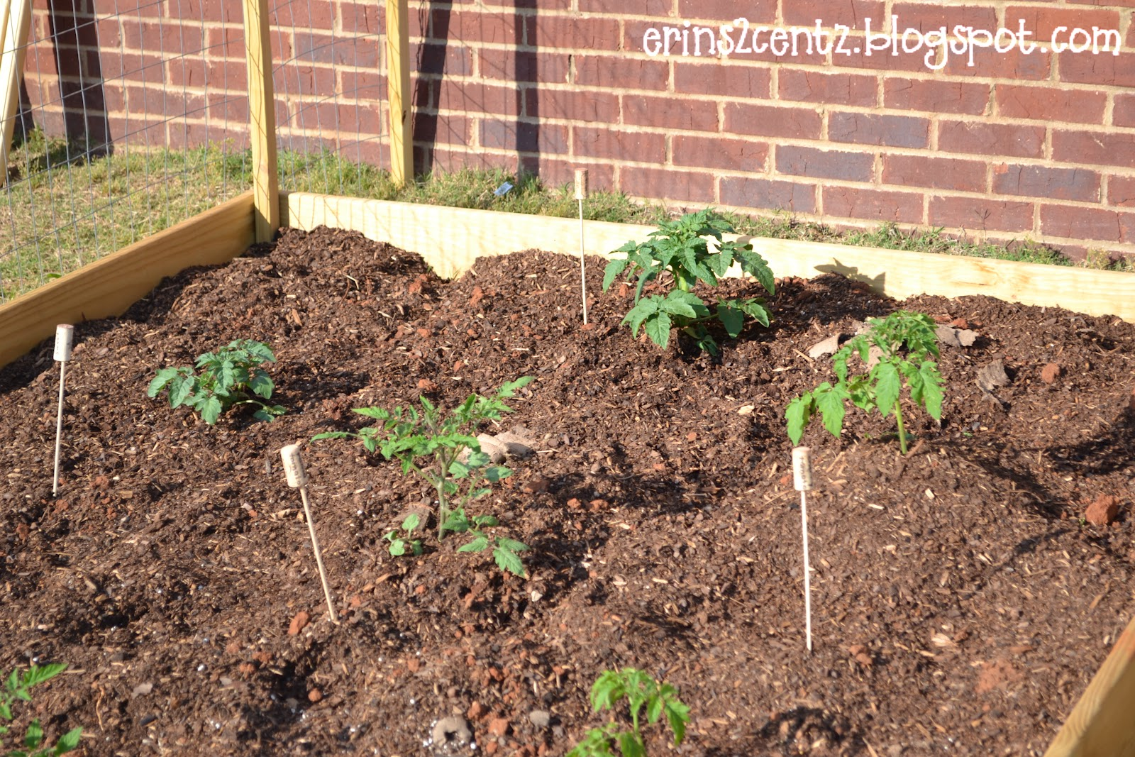 Erin\'s 2 Cents: Our Vegetable Garden