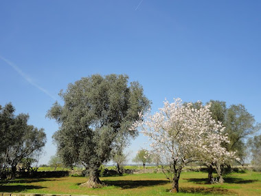 olive and almond trees