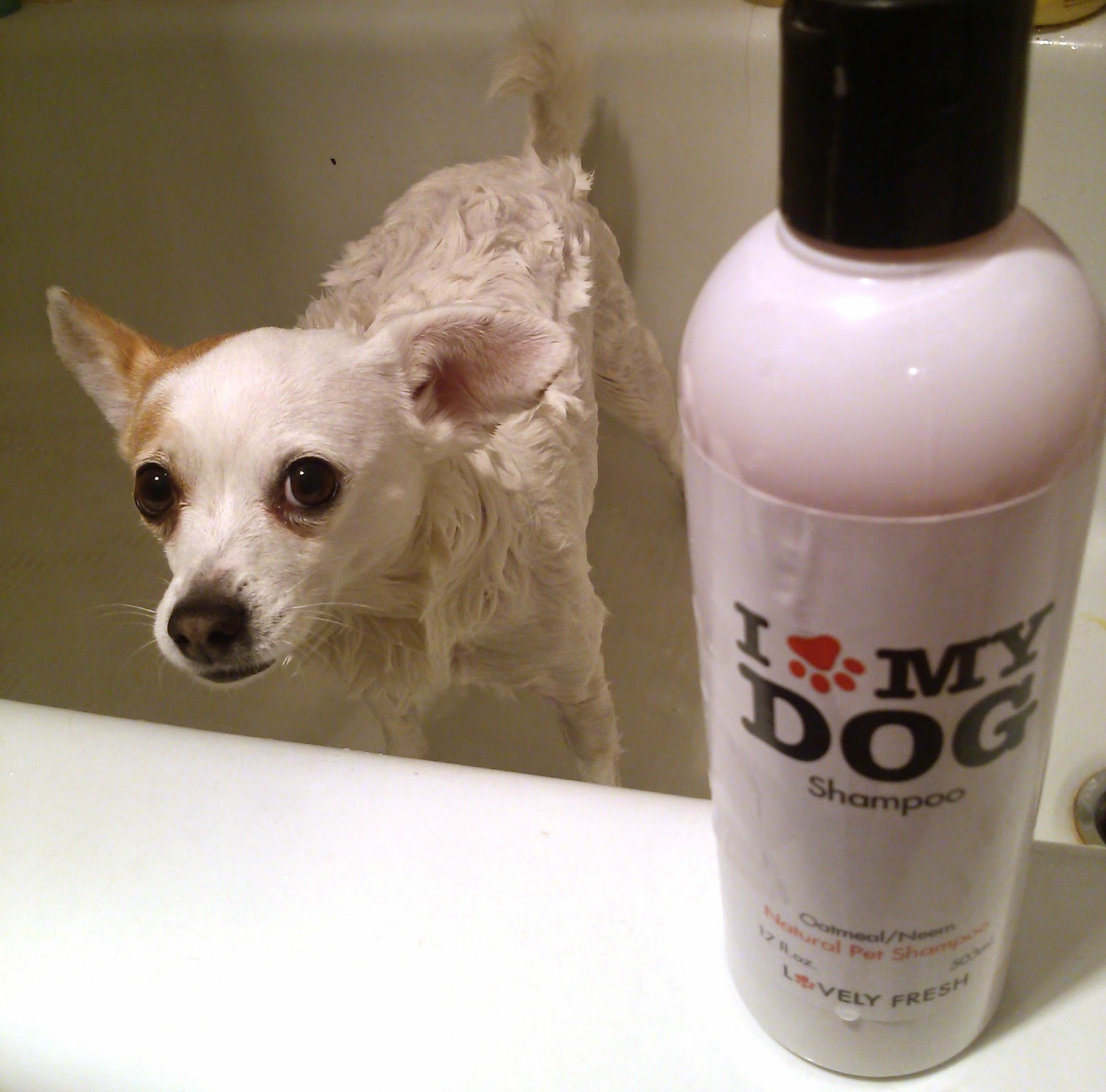 I Love My Dog Shampoo by Lovely Fresh Review