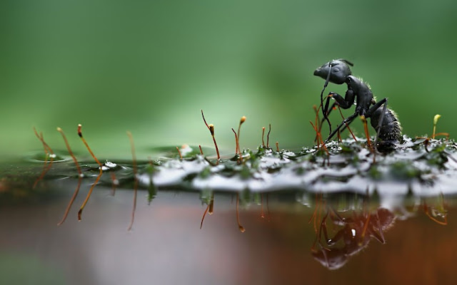 Macro photographs of snails and insects by Vadim trunov, macro photographs, black ant