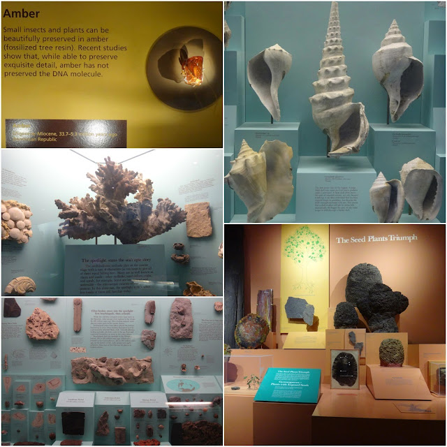 Variety of stones, rocks and seashells at National History Museum in Washington DC, USA