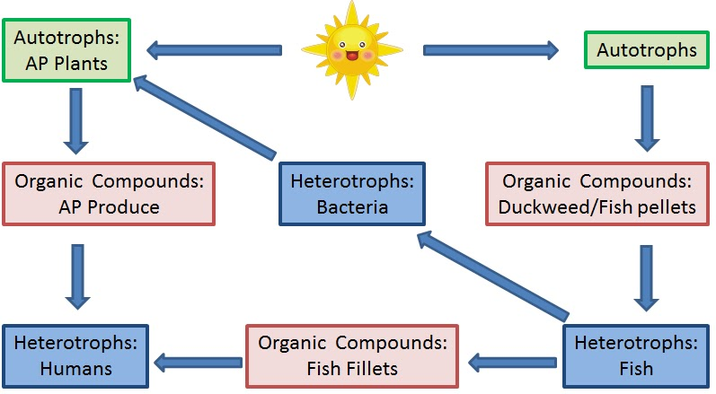 autotrophs that use chemosynthesis