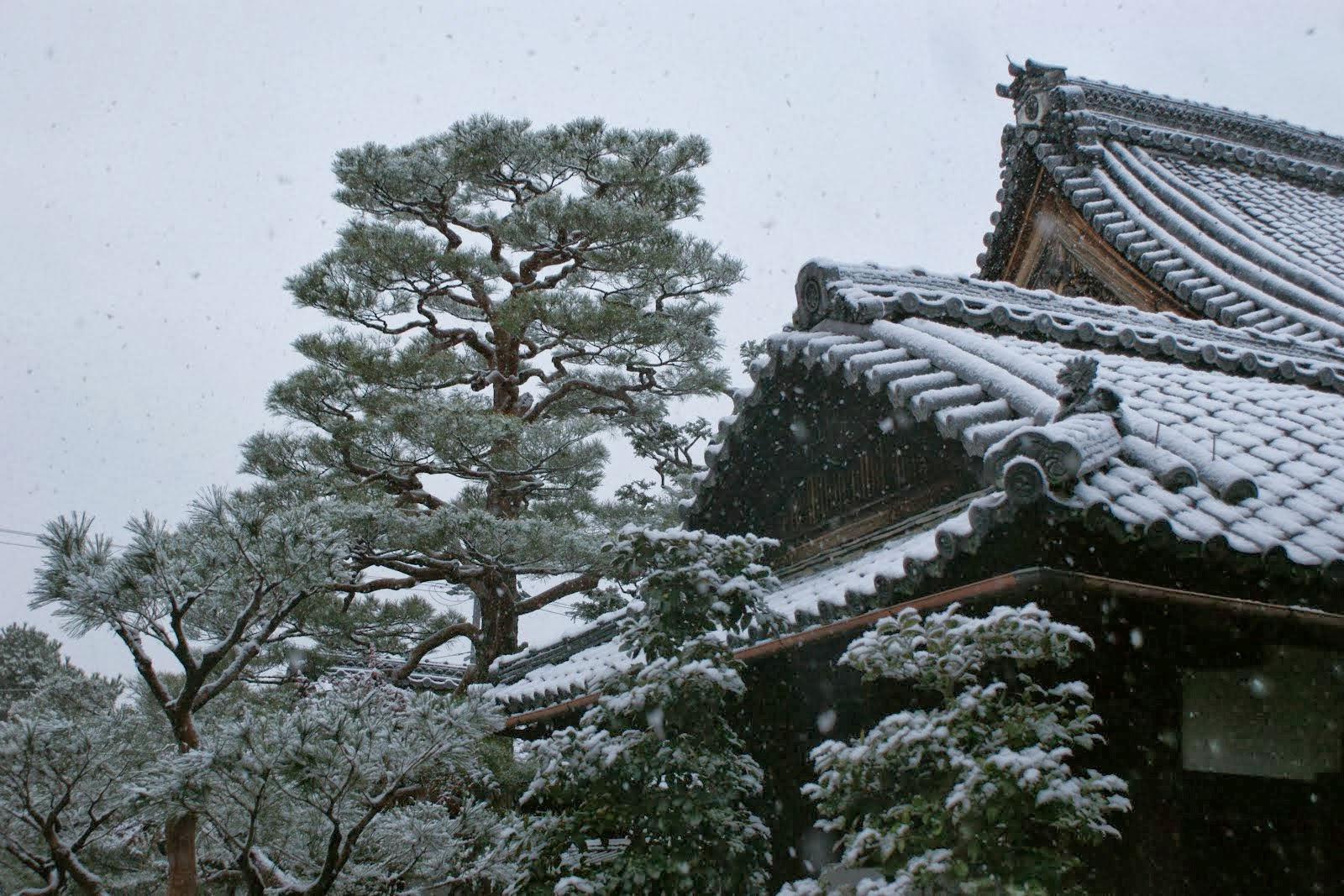 Shunkoin Temple in Snow