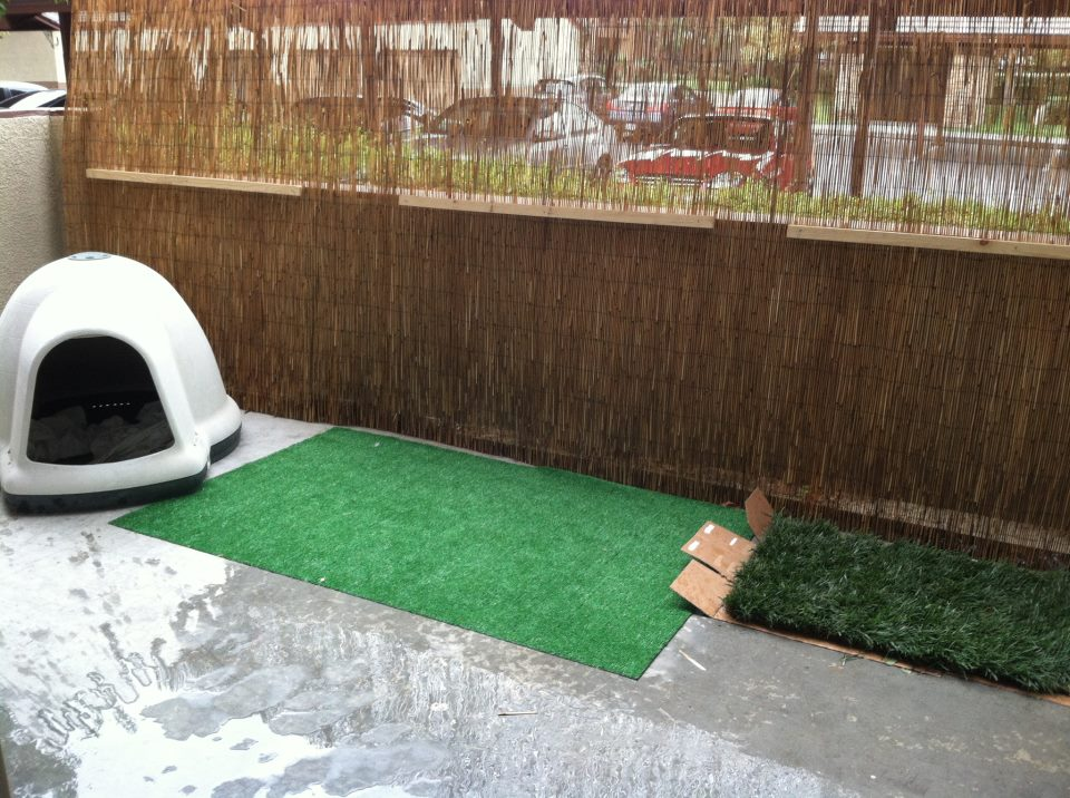 Dog Potty Patch Idea For An Apartment Patio