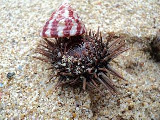 Pantai Ngéden Gunung Kidul Jogja