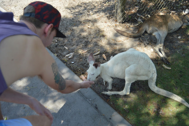 jody feeding kangaroos