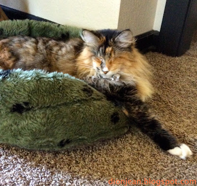 Lucy the blind cat resting in her green cat bed before dinner