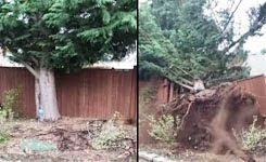 Hey did you see this video? Wind storm blows tree down
