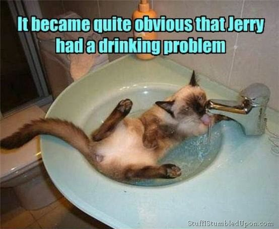 Funny Cat Drinking Meme : Where to apply for alpha testing general game discussion