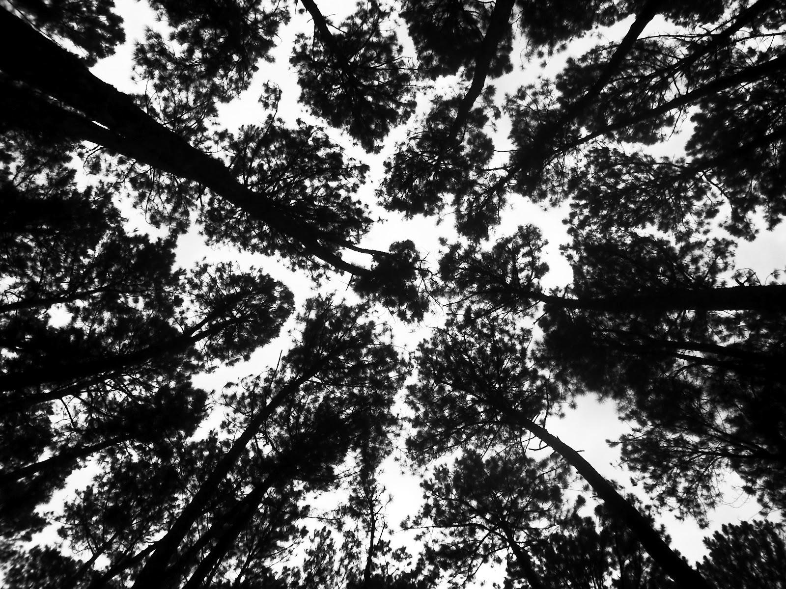 Havia um Bosque