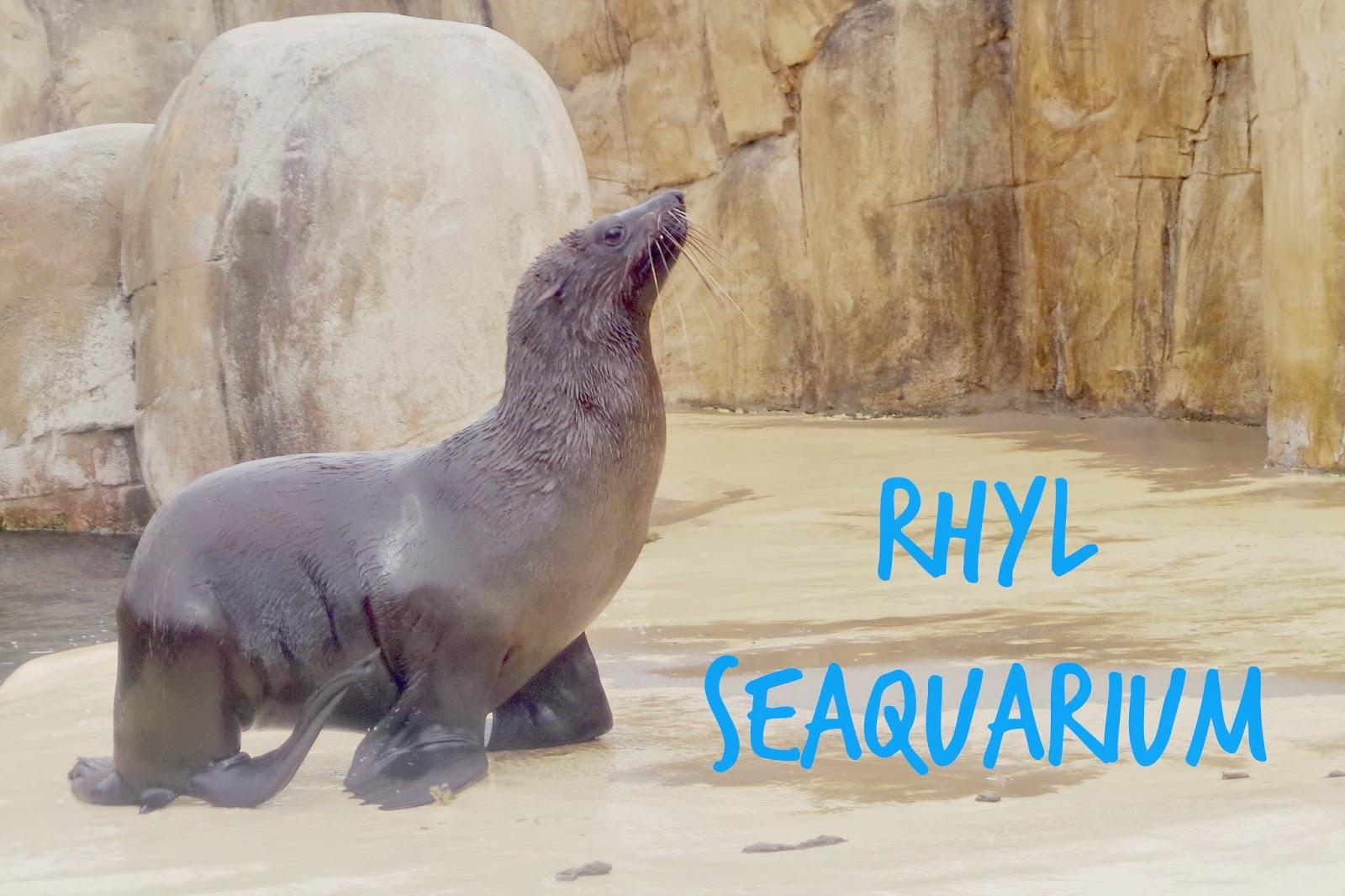 sealions at rhyl