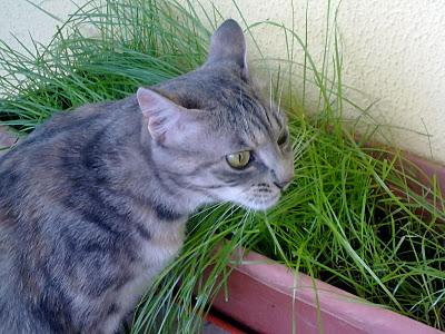 Cara De Bicho Rs Plantas Que Seu Gato Pode Comer