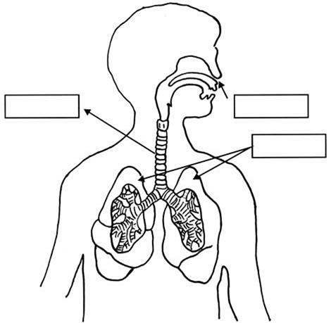 Dibujos para colorear del sistema digestivo para niños - Imagui