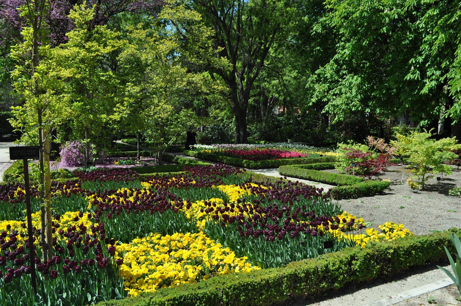 Me he metido en un jard n el jard n bot nico de madrid for Plantas de un jardin botanico