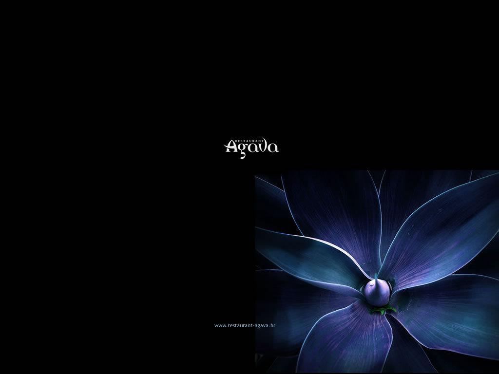 http://1.bp.blogspot.com/-BIhJorJPznI/UMiNV4tyFEI/AAAAAAAABK0/3qKF-bFTty0/s1600/blue_cynea-facebook-1024-768.jpg