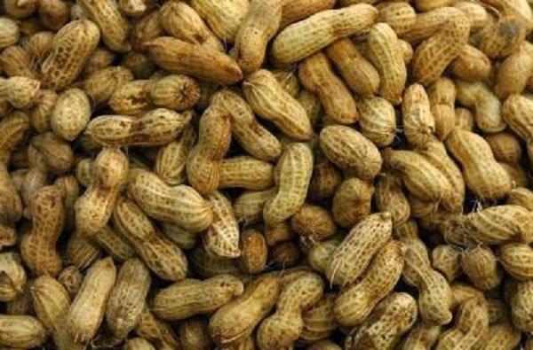 Buah Kacang Tanah