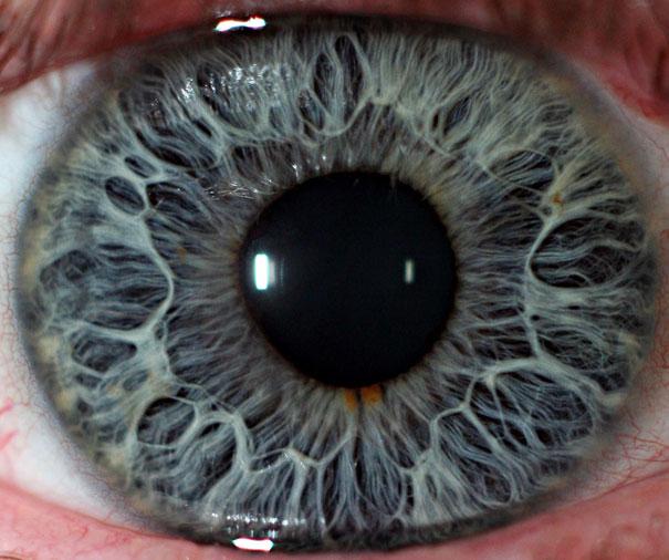 عين الانسان