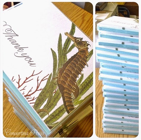 Seahorse Thank You Notes by Concertina Press
